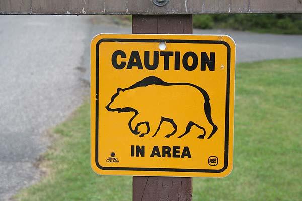 Bären in der gegend
