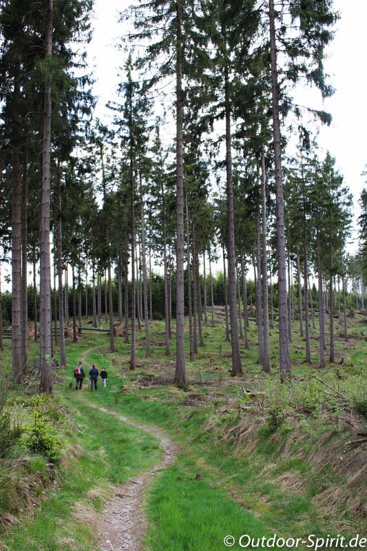 Auf dem Waldskulpturenweg